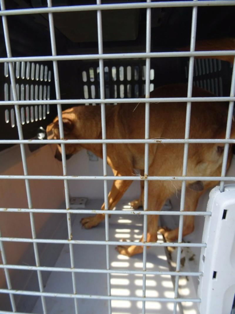 Transfert de 12 + 3 chiens de la fourrière de Piatra Neamt vers Bucarest pour le refuge d'Ellen Img-2065