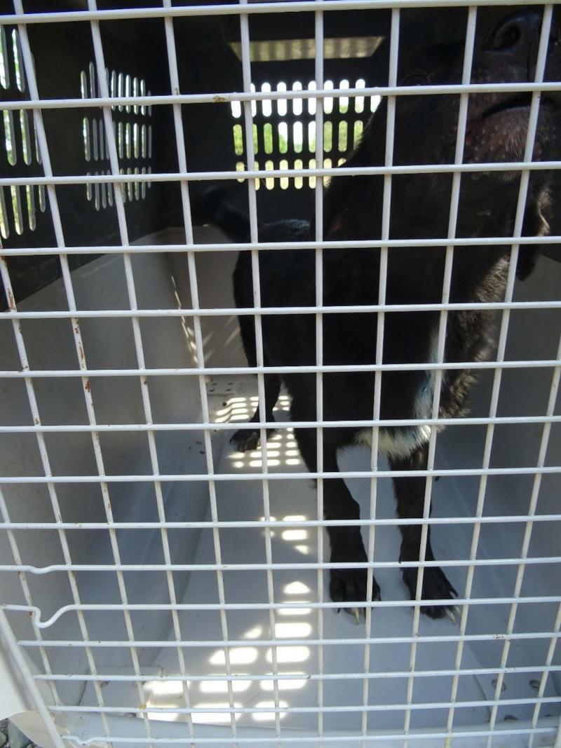 Transfert de 12 + 3 chiens de la fourrière de Piatra Neamt vers Bucarest pour le refuge d'Ellen Img-2066