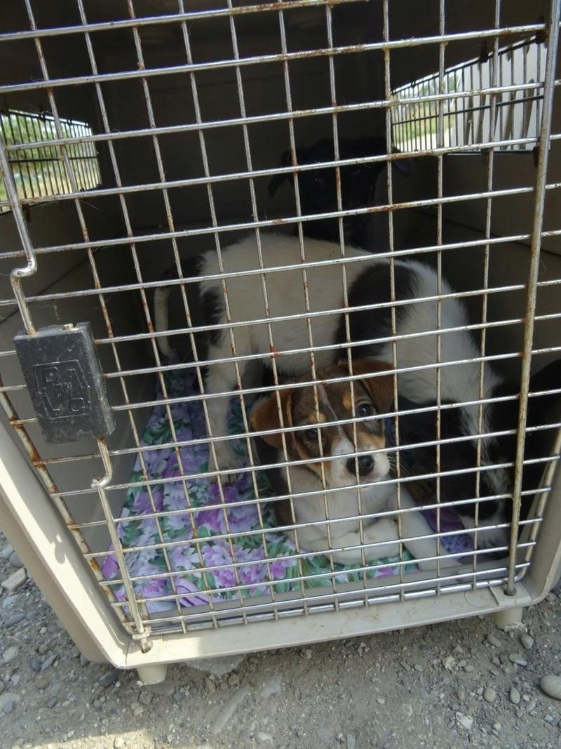 Transfert de 12 + 3 chiens de la fourrière de Piatra Neamt vers Bucarest pour le refuge d'Ellen Img-2067