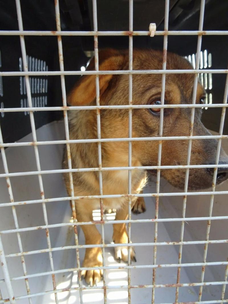 Transfert de 12 + 3 chiens de la fourrière de Piatra Neamt vers Bucarest pour le refuge d'Ellen Img-2068