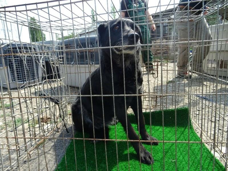 Transfert de 12 + 3 chiens de la fourrière de Piatra Neamt vers Bucarest pour le refuge d'Ellen Img-2069