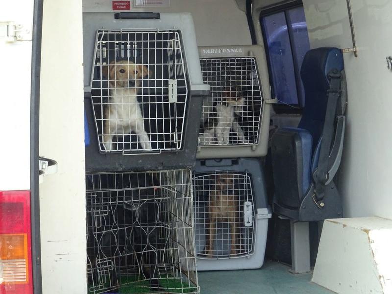 Transfert de 12 + 3 chiens de la fourrière de Piatra Neamt vers Bucarest pour le refuge d'Ellen Img-2070