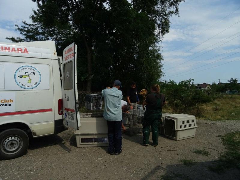 Transfert de 12 + 3 chiens de la fourrière de Piatra Neamt vers Bucarest pour le refuge d'Ellen Img-2072