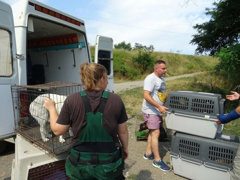Transfert de 12 + 3 chiens de la fourrière de Piatra Neamt vers Bucarest pour le refuge d'Ellen Img-2073