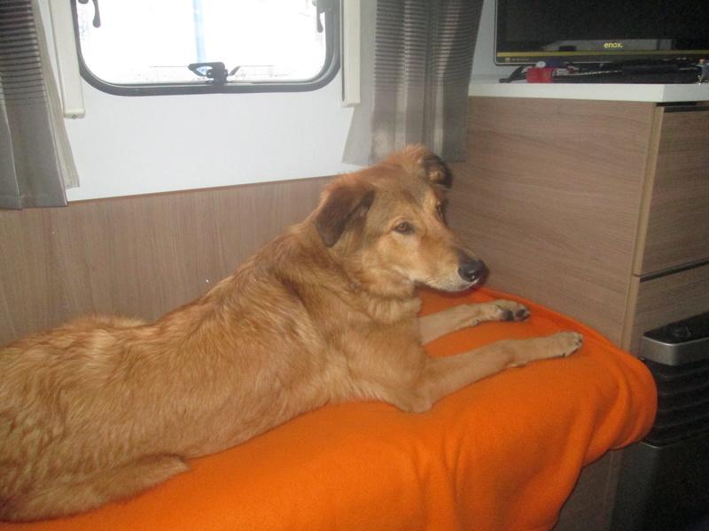 Gustav ist zu Hause  02510