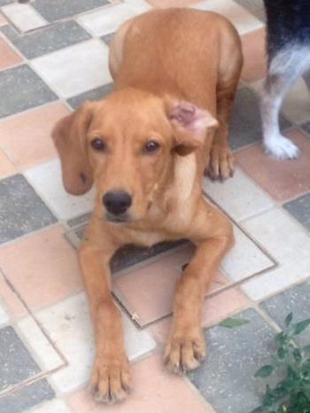 Bildertagebuch - AXEL, ein aufgewecktes Hundekind sucht ein Sofa... - VERMITTELT! Axel_010