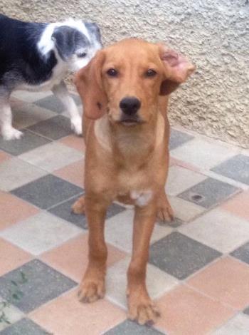 Bildertagebuch - AXEL, ein aufgewecktes Hundekind sucht ein Sofa... - VERMITTELT! Axel_011