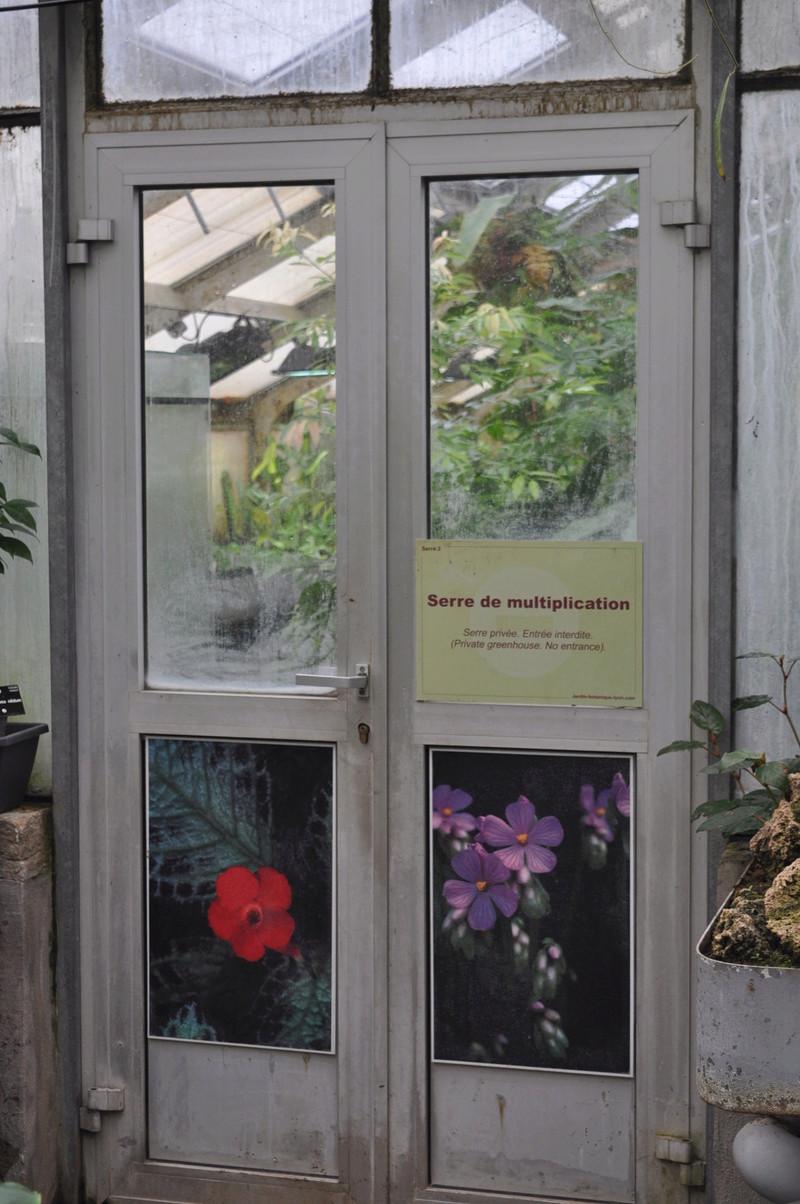 Visite de courtoisie aux bégonias du JB de Lyon Jardin27