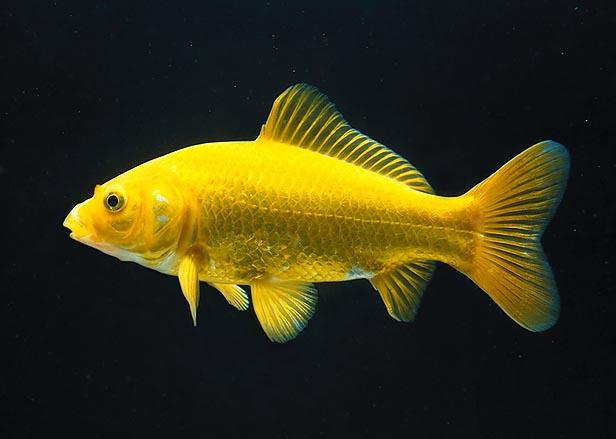 Quel est ce poisson ?? Jpg_un10