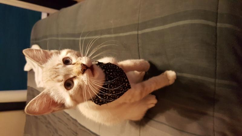 My blue-eyed kitty! 20170710