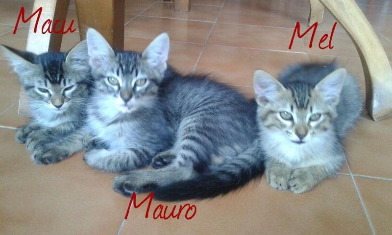 MAURO - TIGRE FONCE - ES (Sole) Img-2599