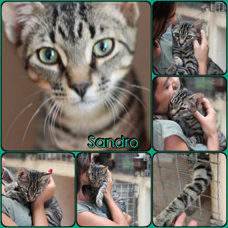 SANDRO - TIGRE GRIS - ES (Sole) Img15010
