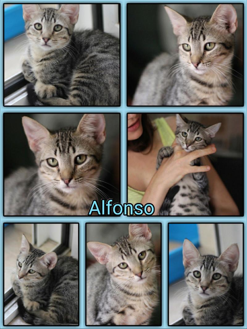 ALFONSO - TIGRE - ES (Sole) Img15012
