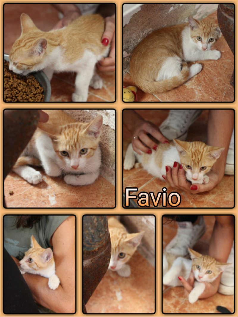 FAVIO - ROUX & BLANC - EN FA EN SUISSE Img15013