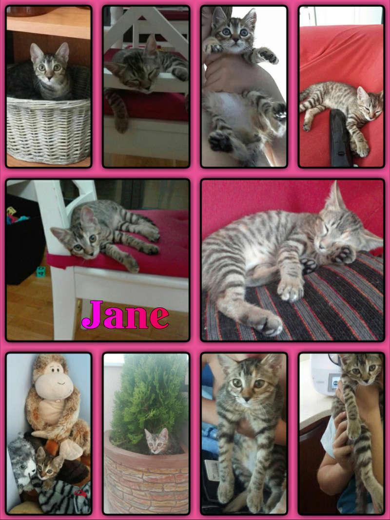 JANE - TIGREE - ES (Sole) Img15019