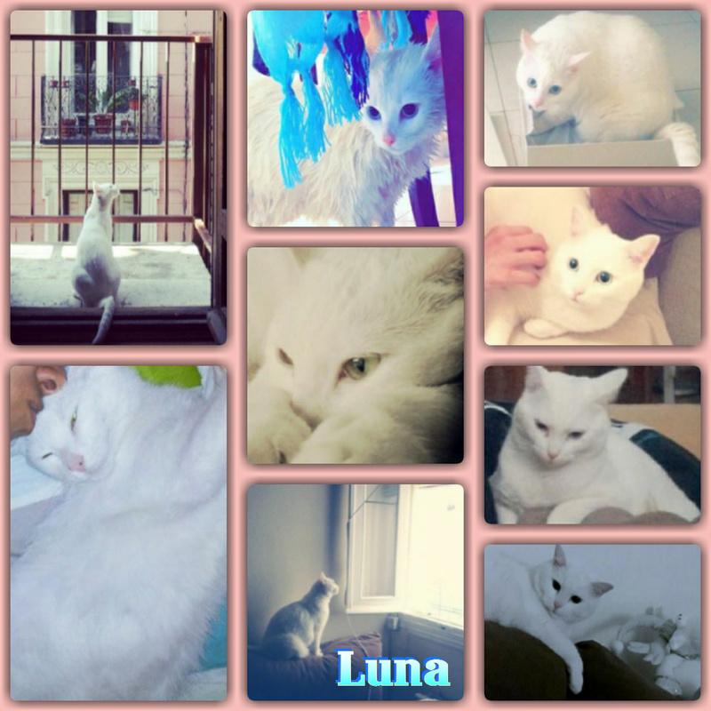 LUNA - BLANCHE - EN FA  Img15029