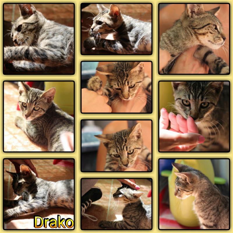 DRAKO - TIGRE - EN FA EN SUISSE Img15047