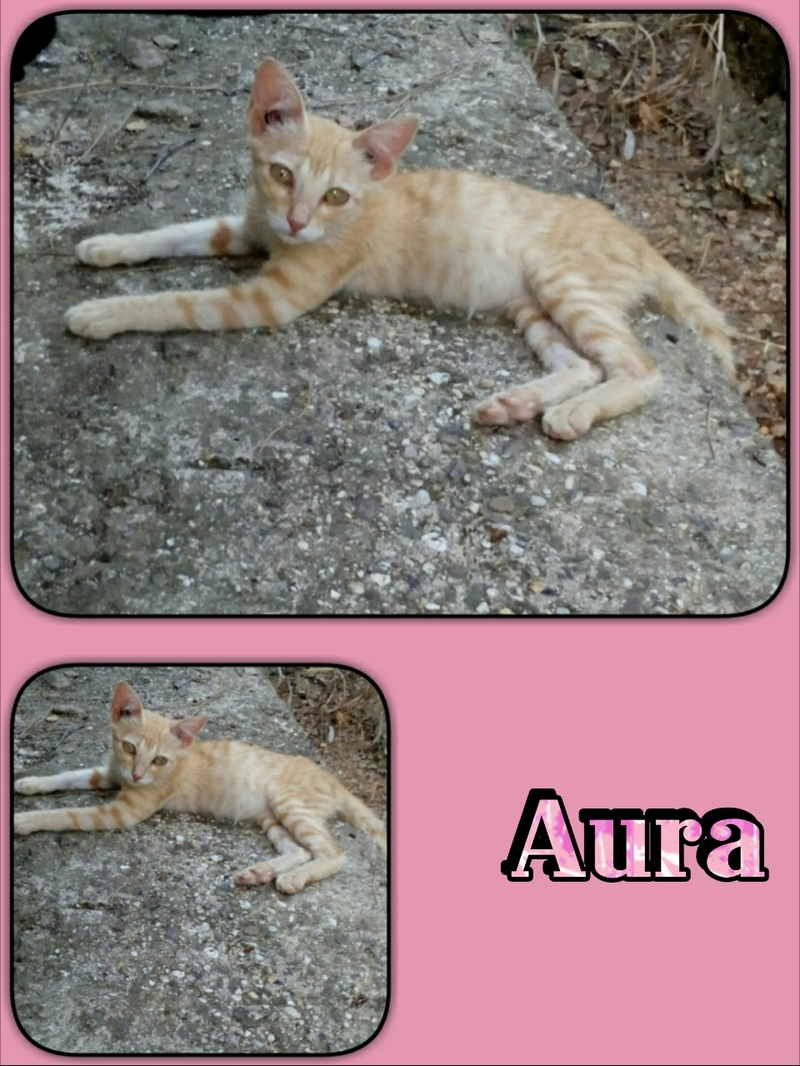 AURA - ROUSSE - ES  Img15059