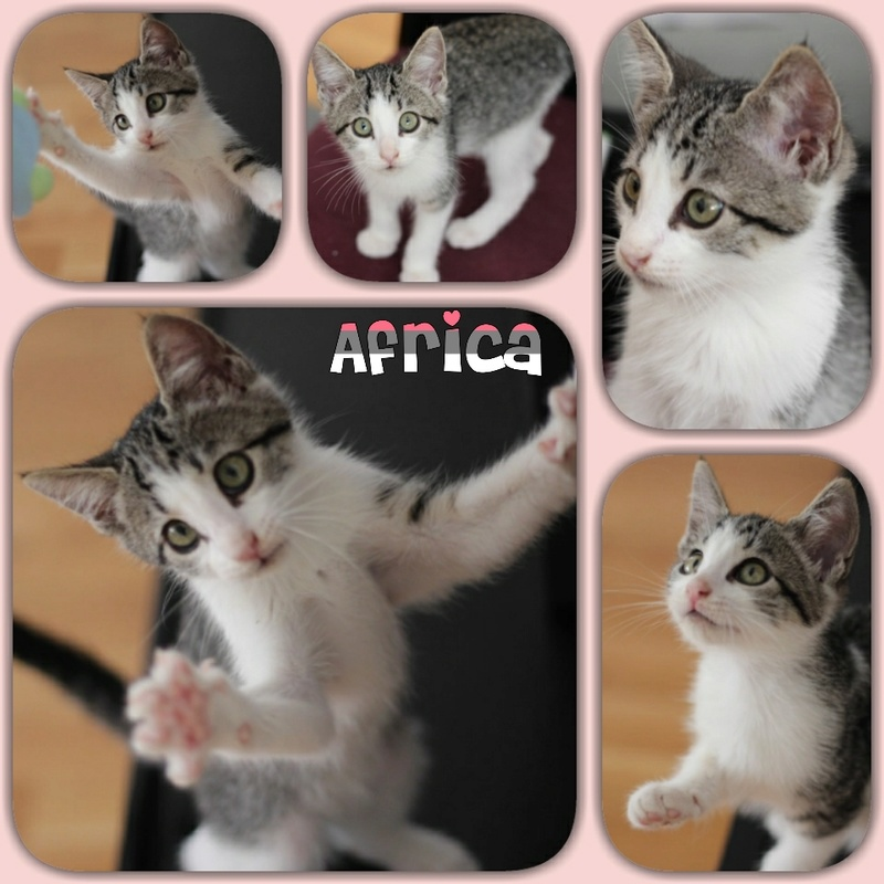AFRICA - TIGREE BLANCHE - ES (Sole) Img15061