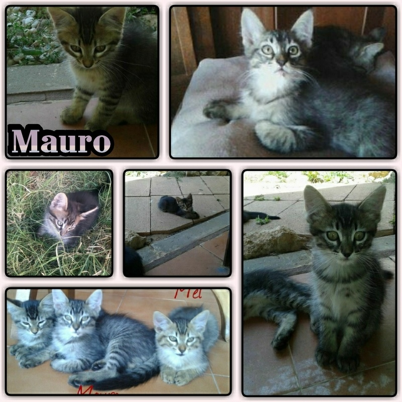 MAURO - TIGRE FONCE - ES (Sole) Img15084