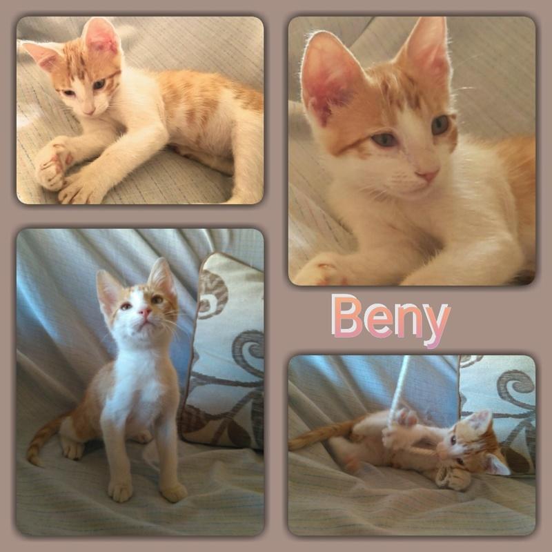 BENY - BLANC & ROUX - ES (Sole) Img15103
