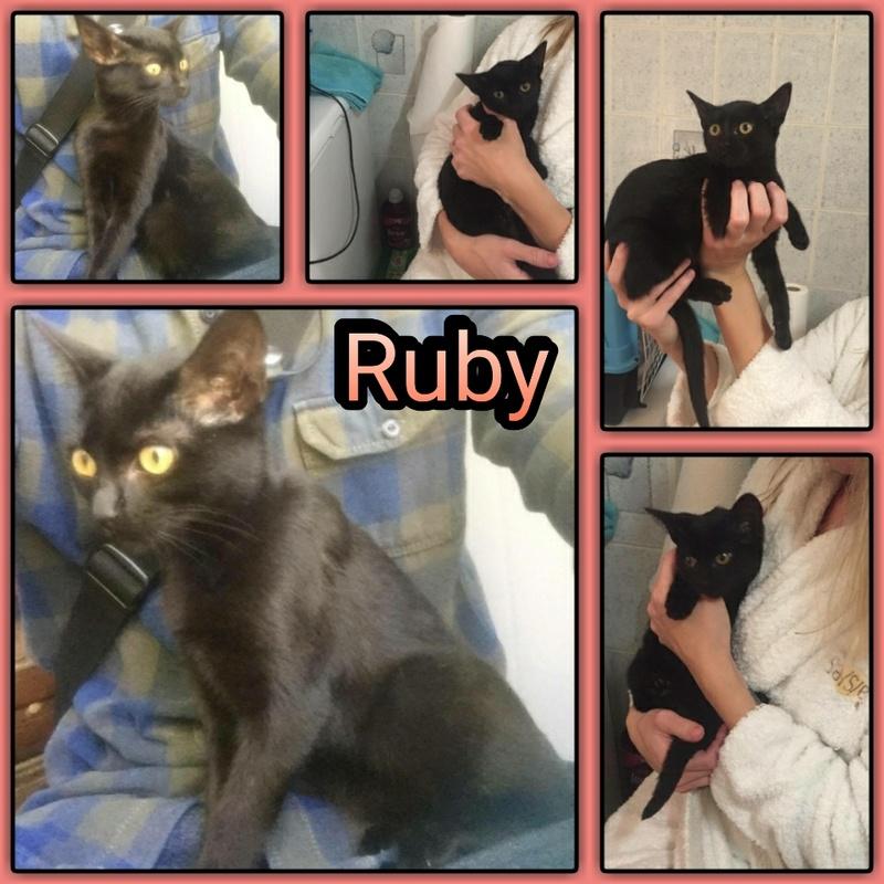 RUBY / NAYA - NOIRE - EN FA DANS LE 91 Img15110