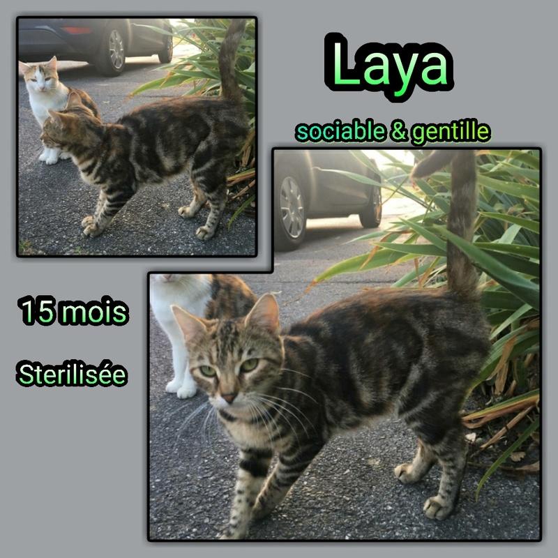 LAYA - TIGREE - EN FA DANS LE 60 Img15114