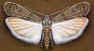 Le monde merveilleux des insectes - Page 4 Mite10