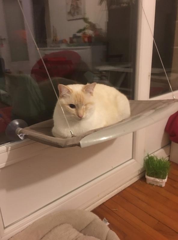 """lancome - Lancôme, jeune chat mâle crème """"red point"""", né en novembre 2015, EN DON LIBRE Img_2416"""
