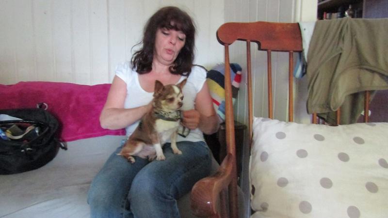 TINO petit chihuahua de 10 ans ADOPTE 20116810