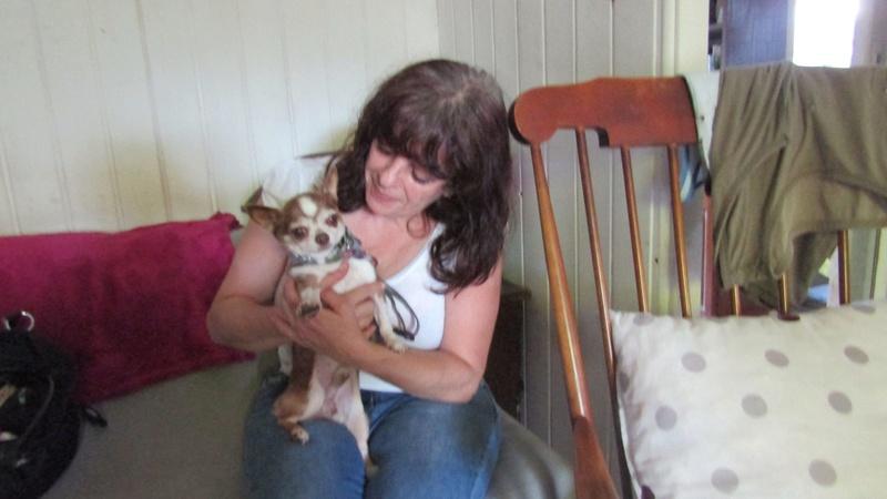 TINO petit chihuahua de 10 ans ADOPTE 20157710