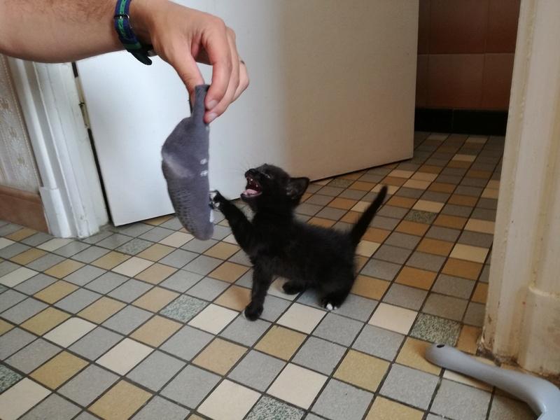 Nutella, chatonne noire type européen née le 1er mai 2017 Img_2011