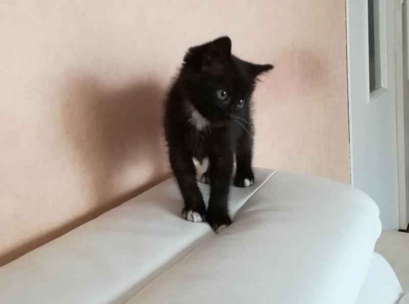 Nutella, chatonne noire type européen née le 1er mai 2017 Img_2014