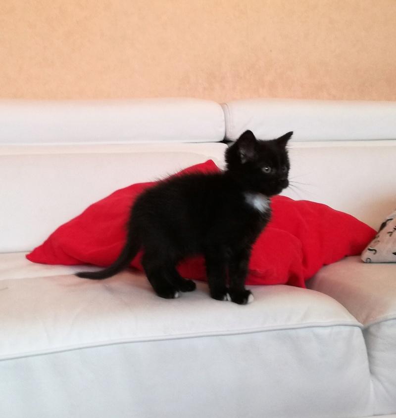 Nutella, chatonne noire type européen née le 1er mai 2017 Img_2015