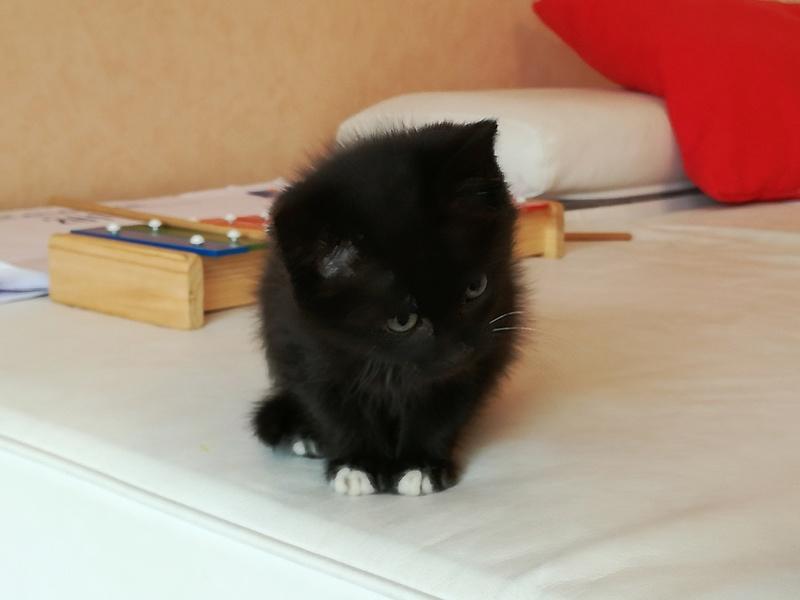 Nutella, chatonne noire type européen née le 1er mai 2017 Img_2016
