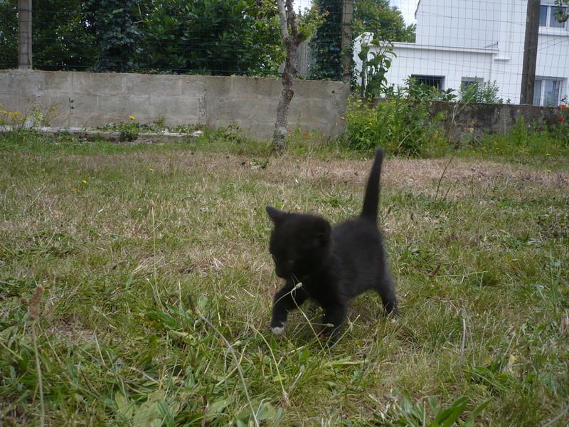 Nutella, chatonne noire type européen née le 1er mai 2017 P1110315