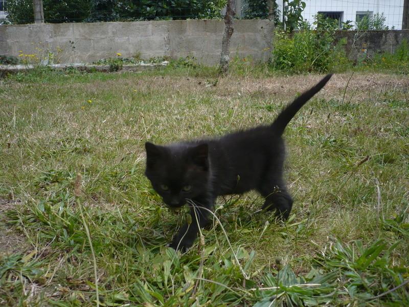 Nutella, chatonne noire type européen née le 1er mai 2017 P1110316