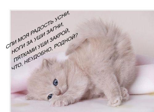 О КОТАХ!!!(доза позитива!!!) -web2110