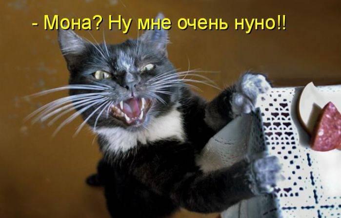 О КОТАХ!!!(доза позитива!!!) Ai1310