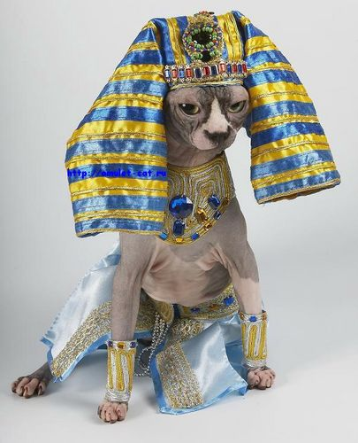 О КОТАХ!!!(доза позитива!!!) Pharao10