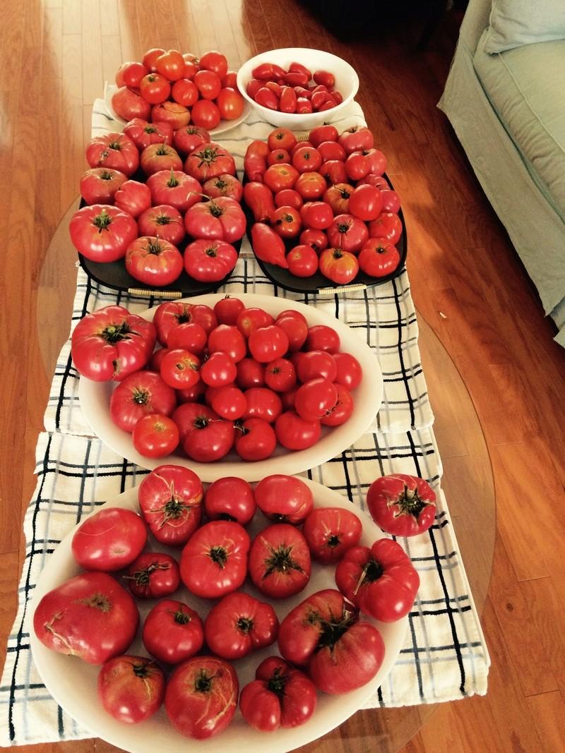 2017 SFG in Brooks, Ga - Page 6 Tomato10