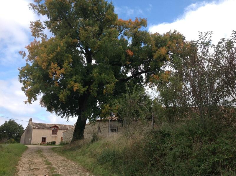 Promenade autour de notre maison ... Image364