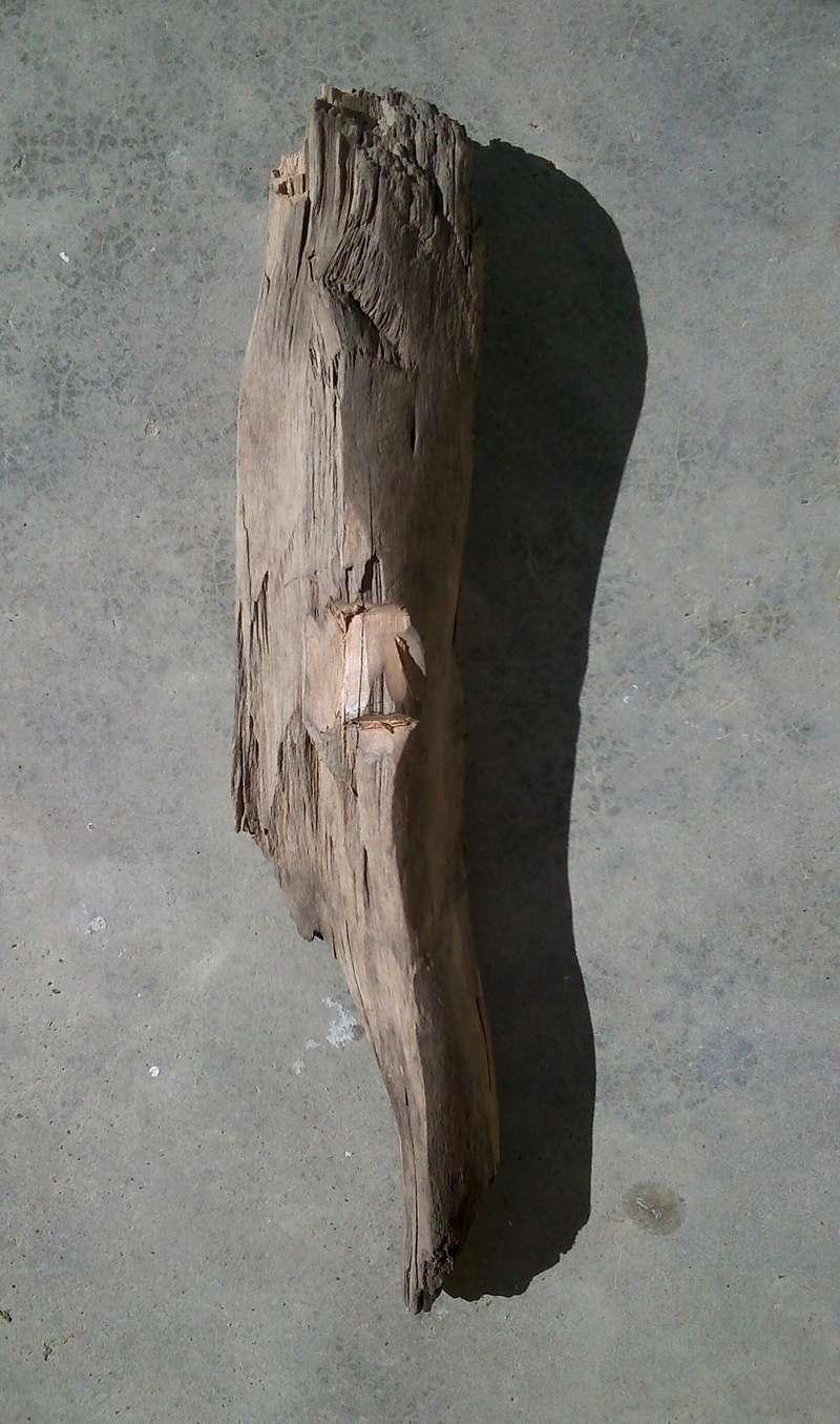 JJ - caché dans le bois Esprit39