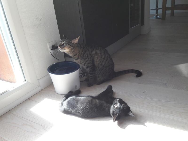 Néji, chaton noir, né le 30/05/17 20170910