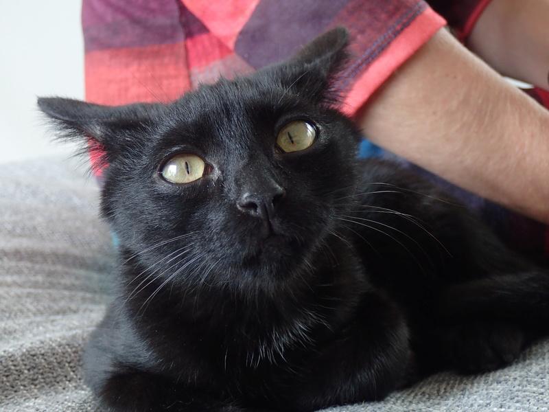Néji, chaton noir, né le 30/05/17 P9301611