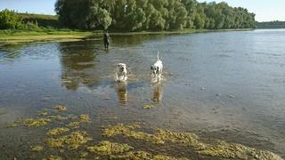 Petite sortie pêche  avec les chiens  Dsc_0212