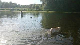 Petite sortie pêche  avec les chiens  Dsc_0213