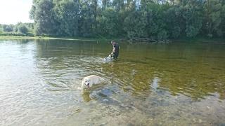 Petite sortie pêche  avec les chiens  Dsc_0215