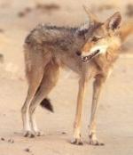 Les animaux disparus-espèces éteintes du fait de l'homme et son mode de vie 5824-610