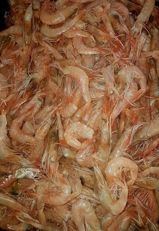 RIBA - MORSKA i SLATKOVODNA: vrste, zanimljivosti, pitanja, ribolov, recepti za pripremu... - Page 21 Kozice10